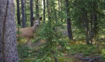 Our friendly deer kept visiting!