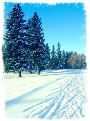 Cross country skiing in river valley golf courses