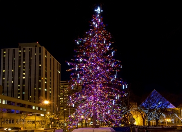 City Christmas tree lights up