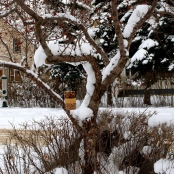 If you feed the birds during winter months, you'll have plenty of company!