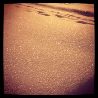 Beautiful powder snow: Dec. 2/2013