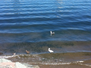 Water birds at Coronado Island