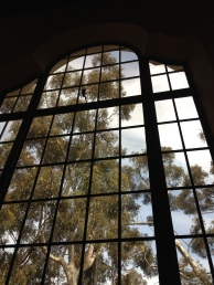 The San Diego Museum of Art windows look out onto eucalyptus trees