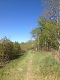 Trails at Blackfoot are wide and grassy