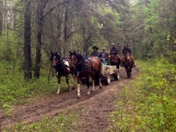 One of the wagons on the Klondike Trail