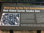 the garter snake den is right in the centre of town.