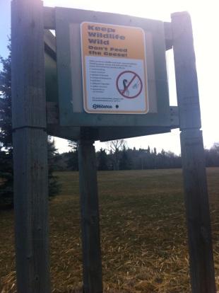 Empty cache: Duck, Duck, Goose: Hawrelak Park