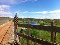 bridge over wetlands