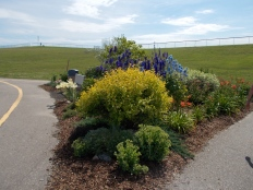 A lovely perennial garden at the combined high school/college/recreation centre