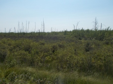 Swamp, and former trees