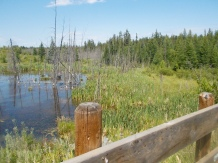 Plenty of wetlands