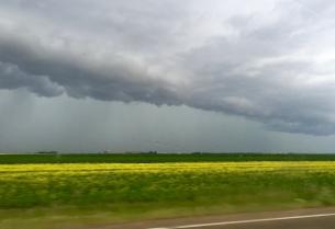 Prairie skies with canola fields