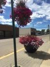 Downtown Westlock