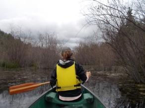 Ross Lake bog