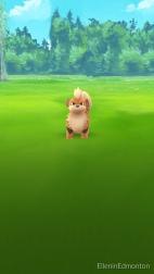 Growlithe, a somewhat rare Pokemon