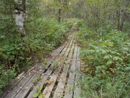 Boardwalk between Kinnaird & Blackett