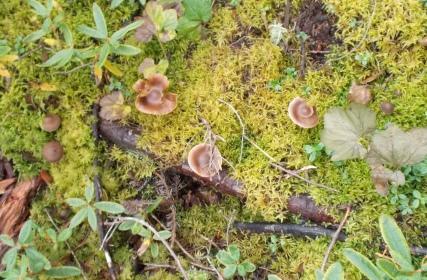 mushrooms on the trail